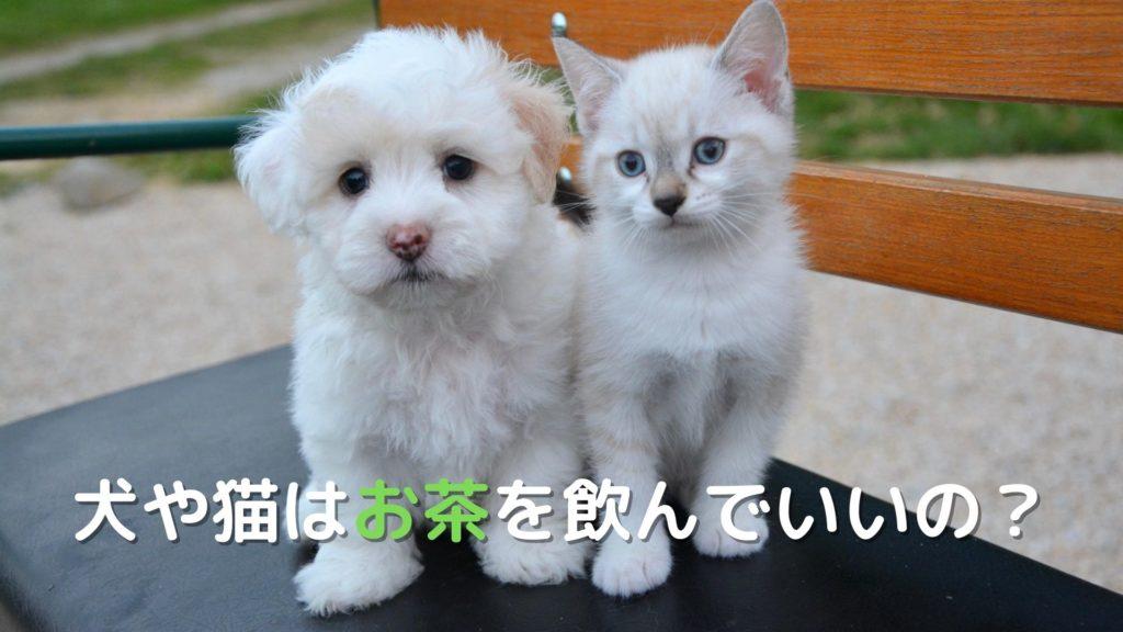 犬や猫は緑茶や紅茶を飲んでいいの?【米国VCA動物病院の見解は】